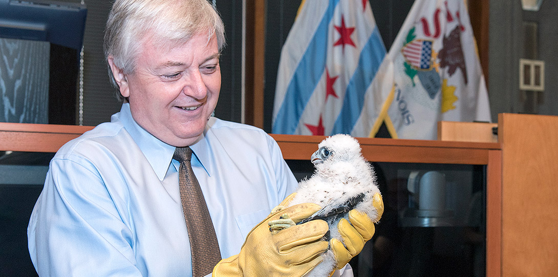 Chancellor Amiridis holding a peregrine falcon chick